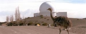 """La imagen corresponde a un suri cordillerano o ñandú petiso, en primer plano, en uno de los caminos de acceso al CASLEO. Al fondo se observa la cúpula del telescopio 2.15cm """"Jorge Sahade""""."""